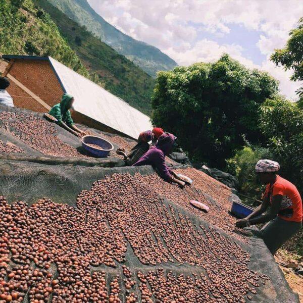 Ruanda Baho Kaffeefarm